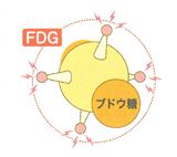 陽電子放出核のイラスト